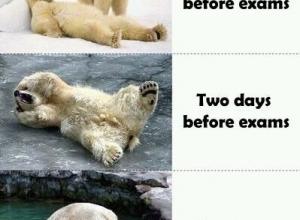 one week before exams omg lolol